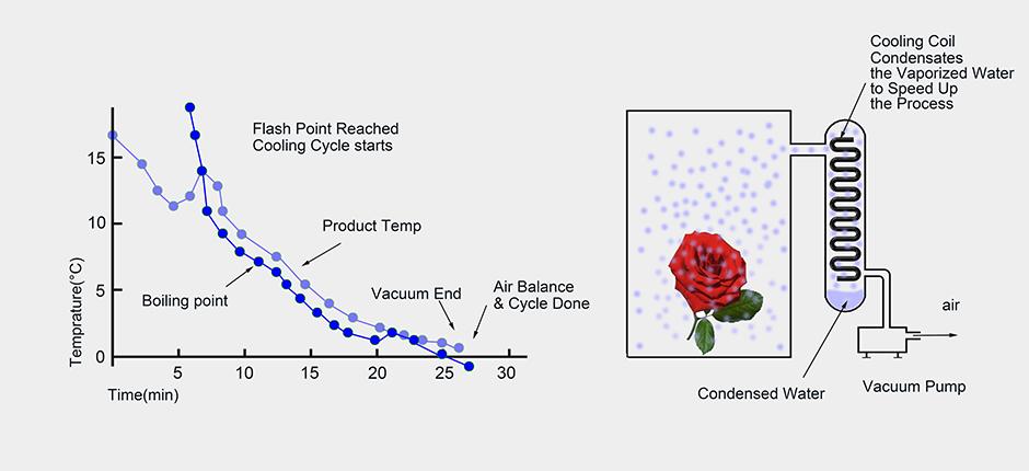 Flowers Vacuum Cooler